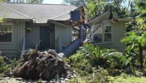 How Trees Can Cause Property Damage